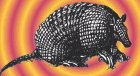 Leo Kottke The Armadillo Album